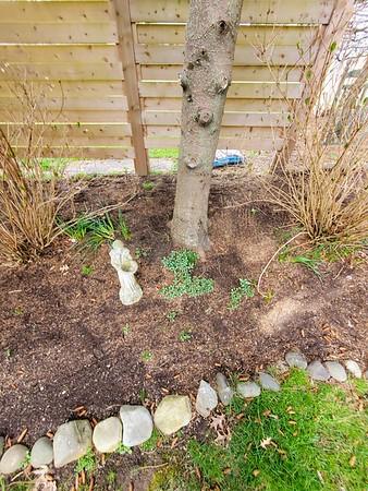 Spring Garden 2020