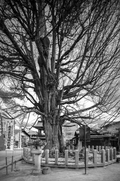 Takayama 280313 21 .jpg