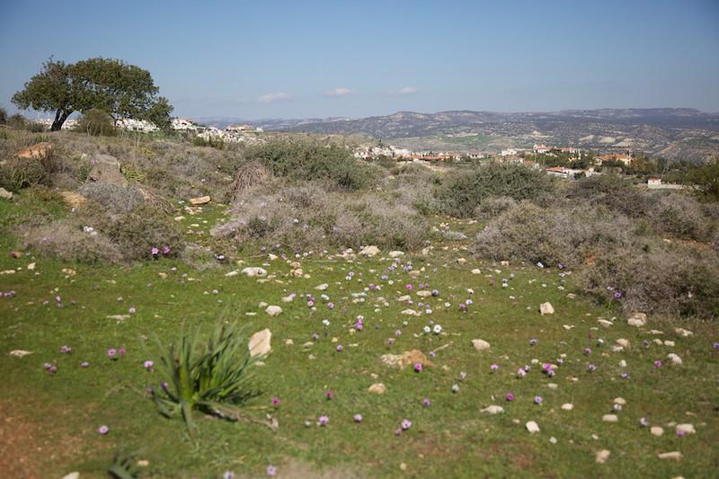 Wild flowers everywhere in spring