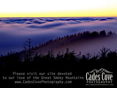 Please Visit Our Website...