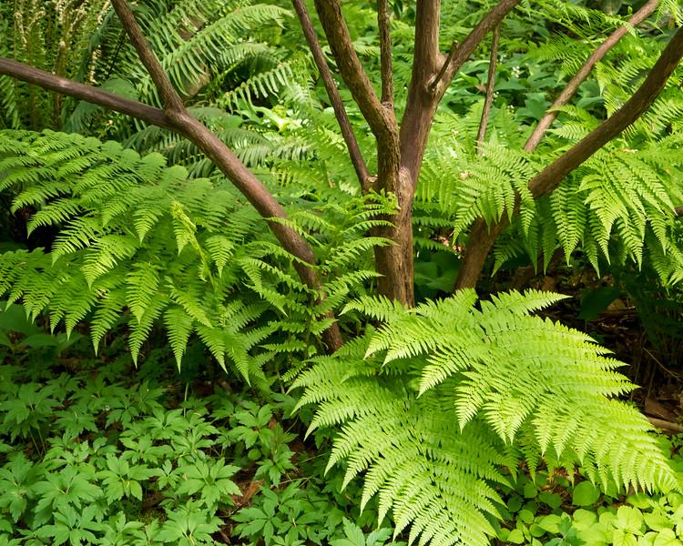 Fern and Tree, Kubota Garden