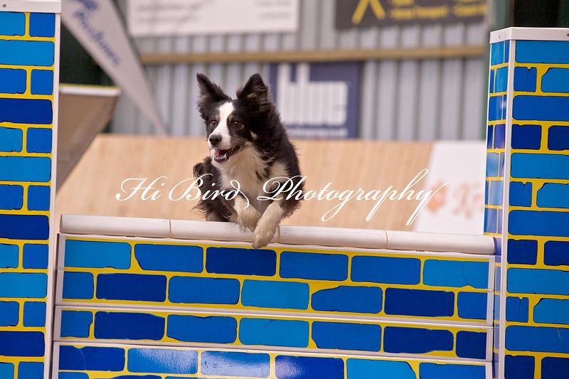 medium dog agility 1158.jpg