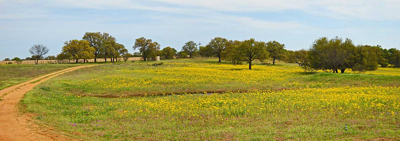 Wildflowers-pano-web.jpg
