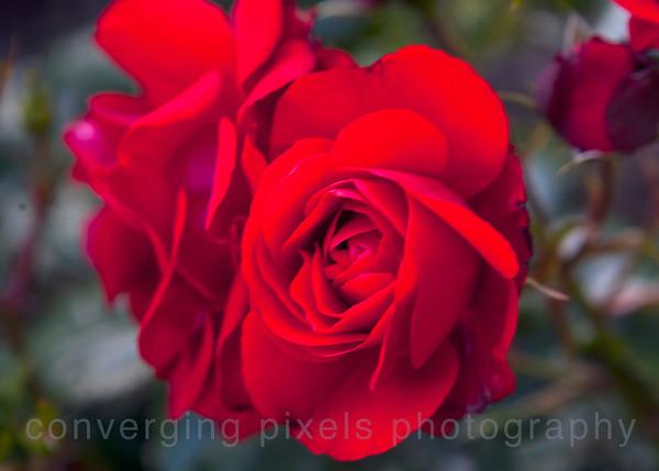 Shore Arcres Gardens, Coos Bay, Oregon  8029
