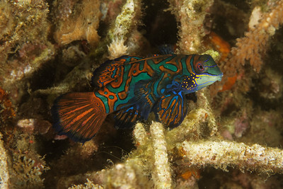 Diving Lembeh strait - March 2019