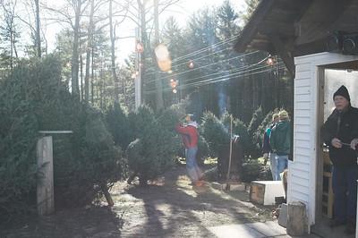 Christmas Trees 2007