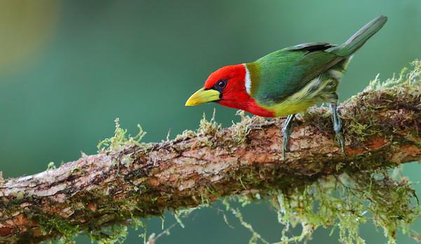 Ecuador - Birds & Mammals