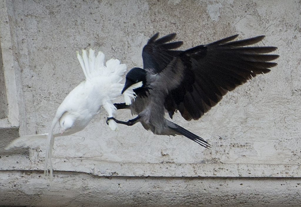 """. <p>8. DOVES <p>Interesting factoid: They�re often bullied by bigger birds, but never by Big Bird. (10) <p><b><a href=\' http://www.twincities.com/news/ci_24997960/heres-how-pope-franciss-gesture-peace-turned-violent\' target=\""""_blank\""""> HUH?</a></b> <p>   (AP Photo/Gregorio Borgia)"""