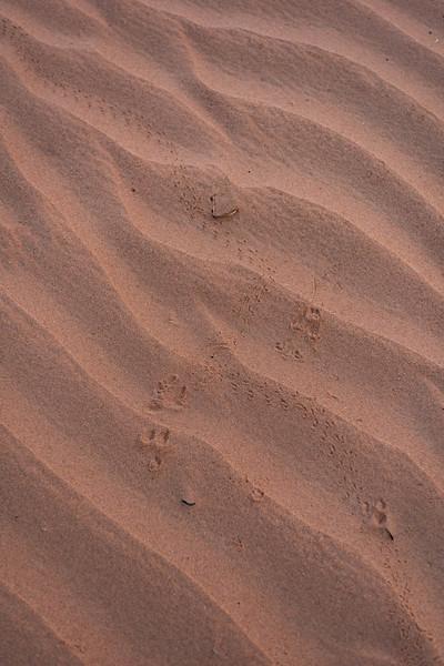 Marruecos-_MM11576.jpg