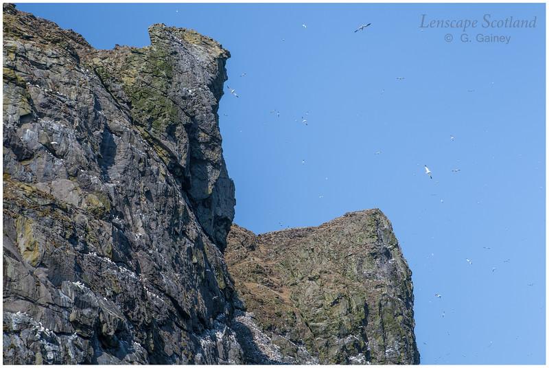 Boreray eastern cliffs (2)