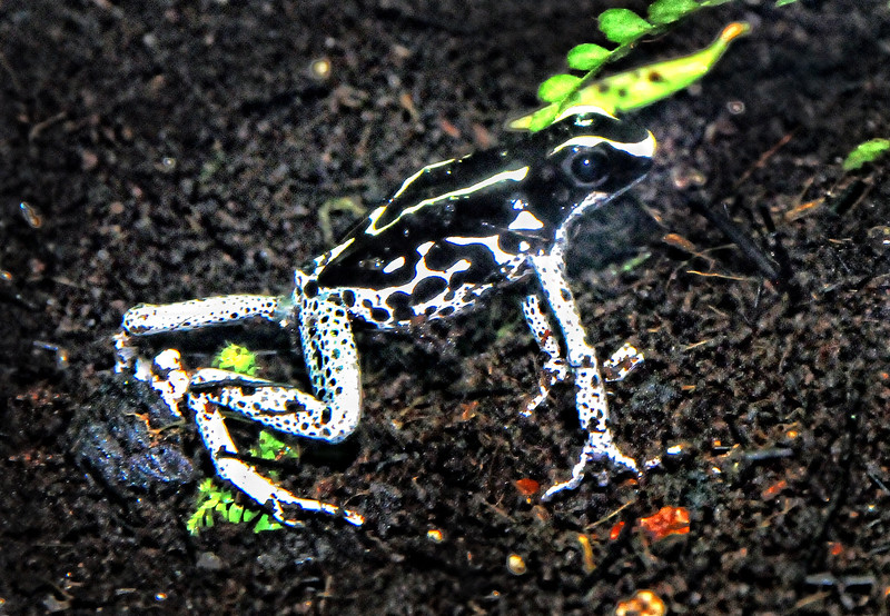 frog  b w .jpg