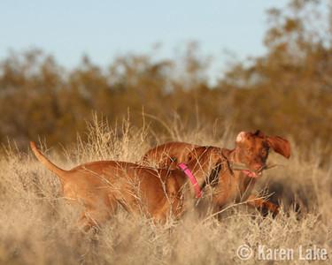Desert Dogs - Jan 2014