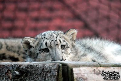Seneca Park Zoo 10/21/19