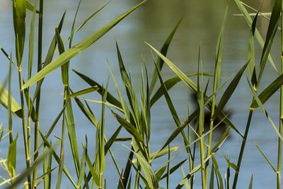 Las Vegas Wetlands