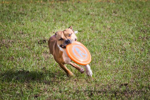 _MG_2564Up_dog_International_2016_StephaniellenPhotography.jpg