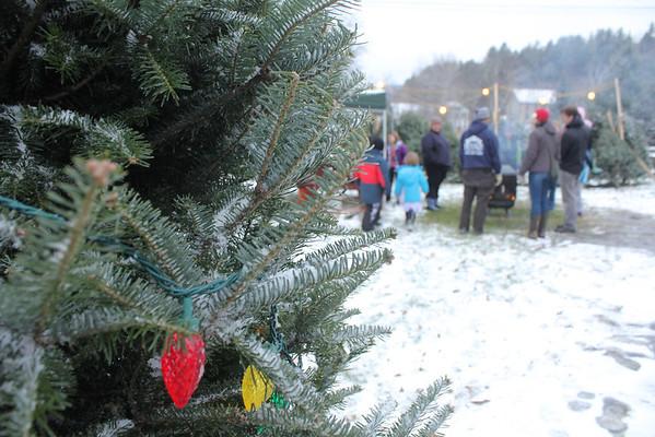 Bridgewater Christmas Tree Sale