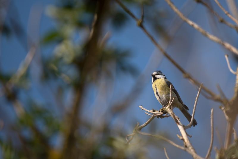 _SO06040 oiseau.jpg
