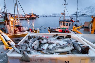 Lofoten fishery