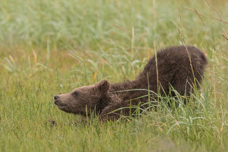 alaska-bears-15.jpg
