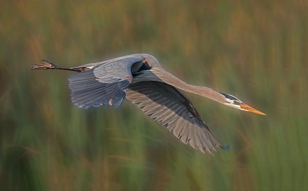Viera Wetlands - December 21, 2014