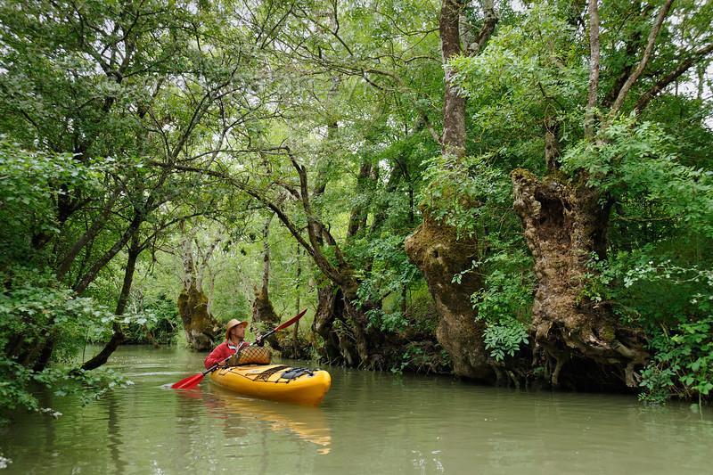 Kayaker meets tree monsters.