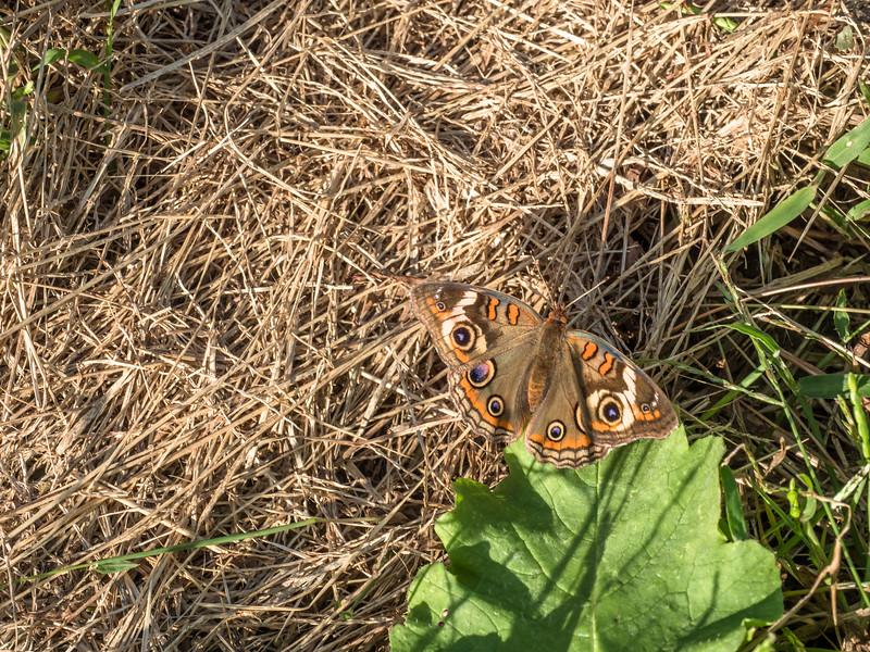 95 Oct Butterfly in pumpkin patch-1.jpg