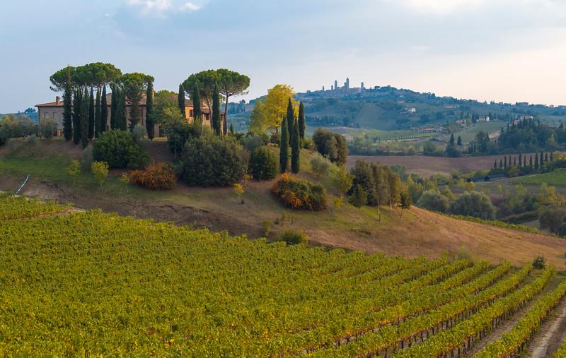 Vineyard and Farm, San Gimignano, Tuscany