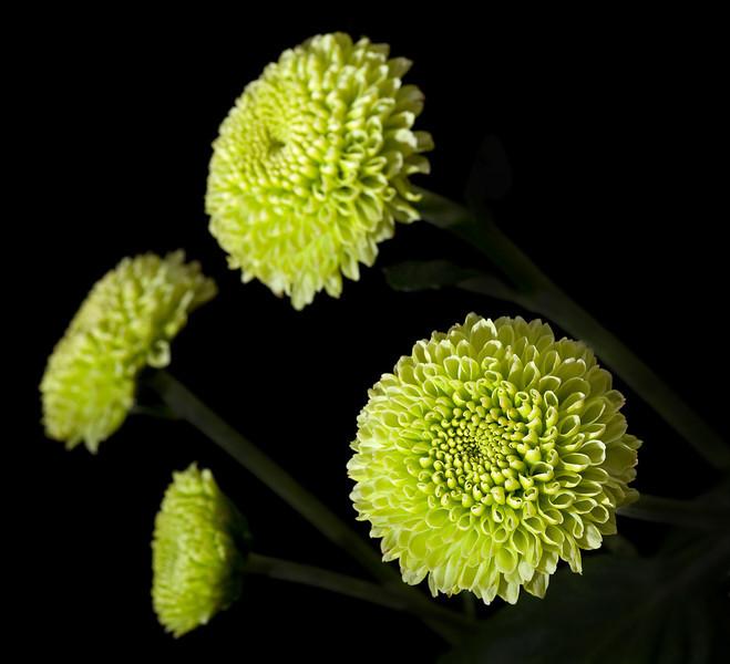 Four flowers_5012731230_o_8179000405_o.jpg
