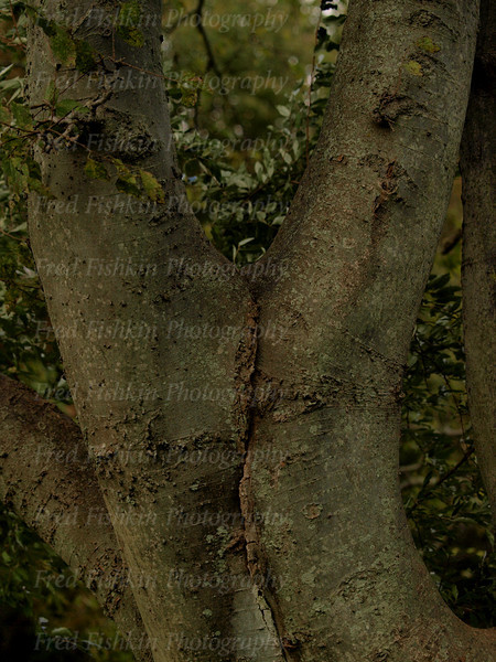 tree couple.jpg