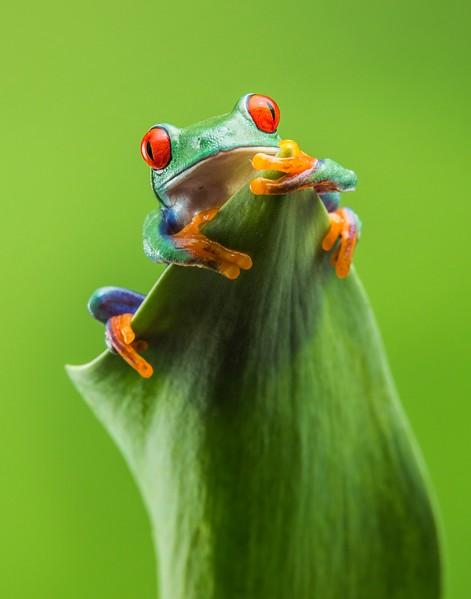 Frogscapes096_Cuchara_5402_020614_001625_5DM3L.jpg
