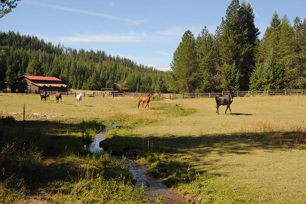 John's Horses