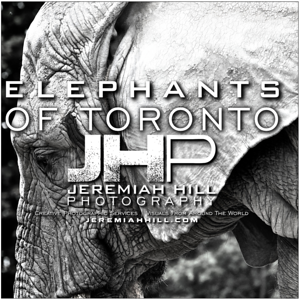 ELEPHANTS OF TORONTO