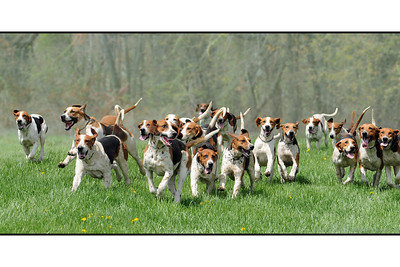 Fairfax Hounds