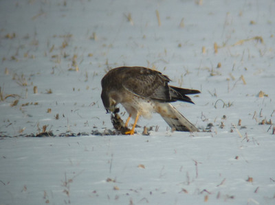 Birding 3