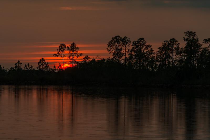 Everglades (27 of 60).jpg