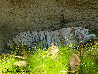 Memphis, Tennessee Zoo