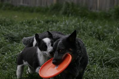 Puppy Pics - Rookie