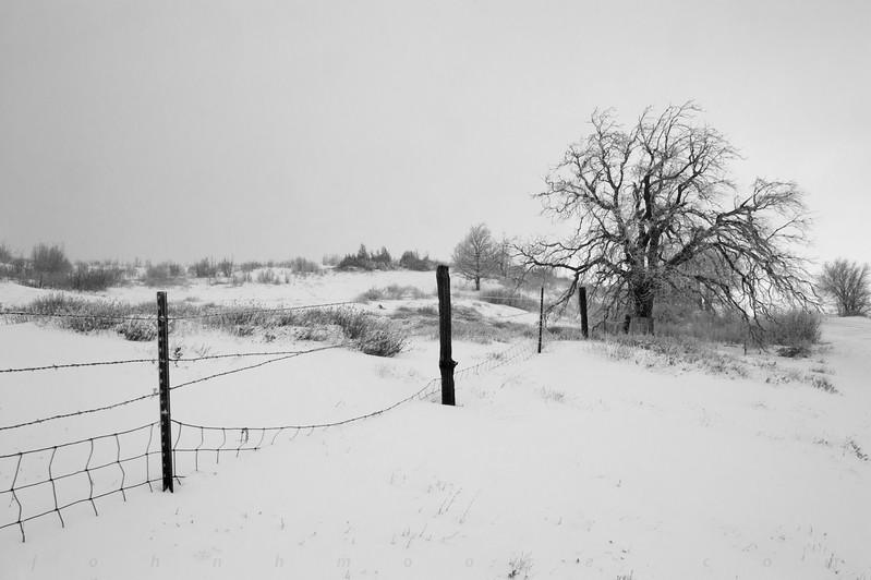 Fenceline in snow