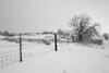Fenceline in snow