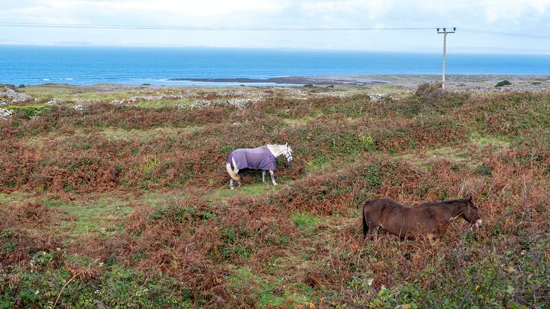 Ireland-Aran-Islands-Inishmore-39.jpg
