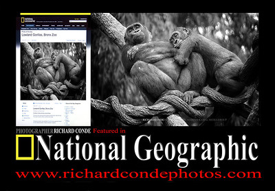 National Geographic Gallery