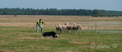 Continental Sheepdog Championship 2012