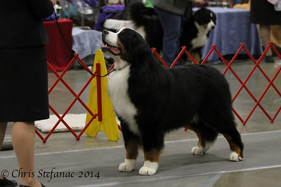BMD- Best of Breed