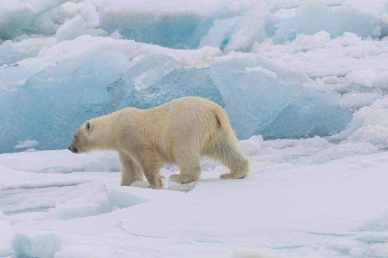 Inspirato-Arctic_Expedition18-04-Russebukta-1198.jpg
