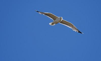 Colorado Field Ornithologists 2017
