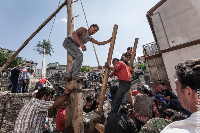 L'innalzamento del Maggio. Attraverso un sistema di funi e carrucole,  gli uomini, sollevano il Maggio con i suoi 35 metri di altezza.