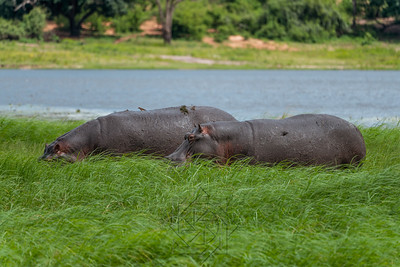 Chobe River_3692-Edit