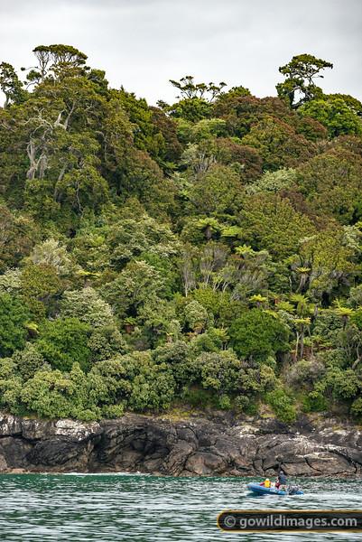 Stewart Island Wilds
