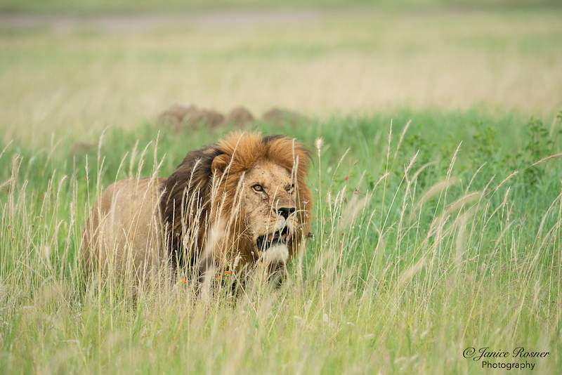 King in the Grass