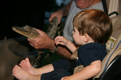 Gabe and the Alligator